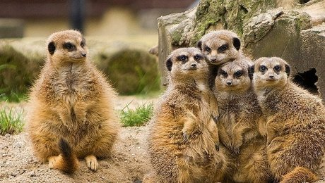 Meercat onboarding program in social learning environment